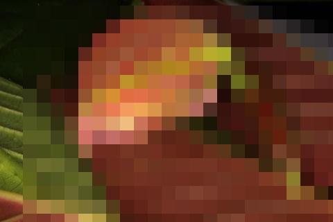 【衝撃画像】なんか・・進化ってすごいな