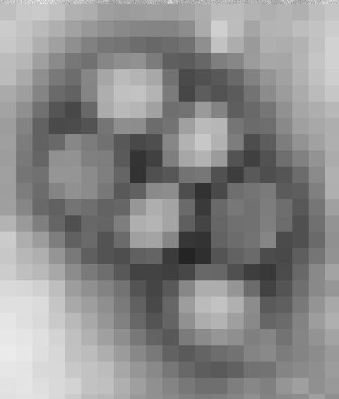 【オカルト】感染症マニアが紹介する危険な病原体